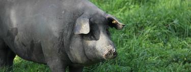 Nueve recetas con carne de cerdo ibérico para disfrutar de un ingrediente único en el mundo