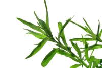 El estragón: un pequeño ingrediente con mucho potasio