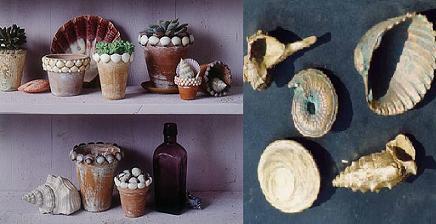 Macetas decoradas con caracolas