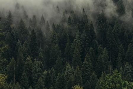 Un bosque como EEUU y China juntos: estos investigadores dicen tener el plan más efectivo y barato para frenar el cambio climático