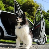 Cómo viajar con tu mascota en el coche de forma segura