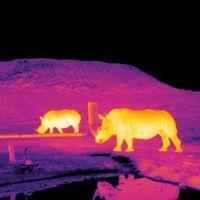 Software y técnicas usadas en astrofísica para monitorizar especies en peligro de extinción