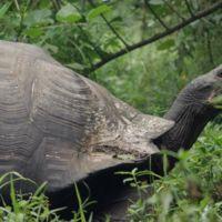 Videos inspiradores: Galápagos, mucho más que fauna