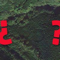 No, los alienígenas no han plantado árboles en círculo: han sido los japoneses y es un experimento de casi 50 años