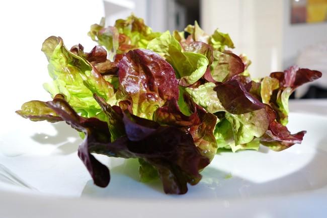 Oak Leaf Lettuce 3450388 1280