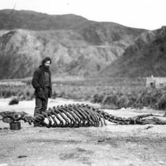 Foto 5 de 18 de la galería las-primeras-fotografias-de-la-antartida en Xataka Foto