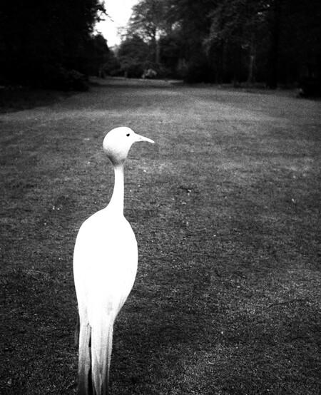 Bill Brandt Tarde en Kew Gardens, 1932 Evening in Kew Gardens 25,24 x 20,48 cm Private collection, Courtesy Bill Brandt Archive and Edwynn Houk Gallery © Bill Brandt / Bill Brandt Archive Ltd.