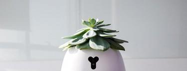 El robot HEXA ayuda a la naturaleza predeterminada de las plantas a sobrevivir en caso de no poder atenderlas