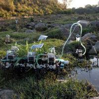 Plantas nómadas: donde convergen el arte y la ciencia