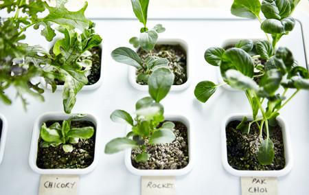 Ikea Plantas Ph140225