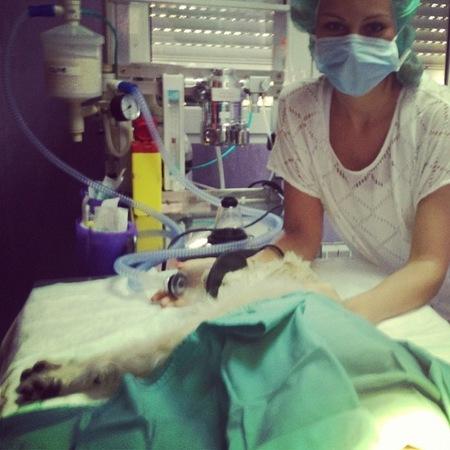 Adivina quién... quería ser veterinaria