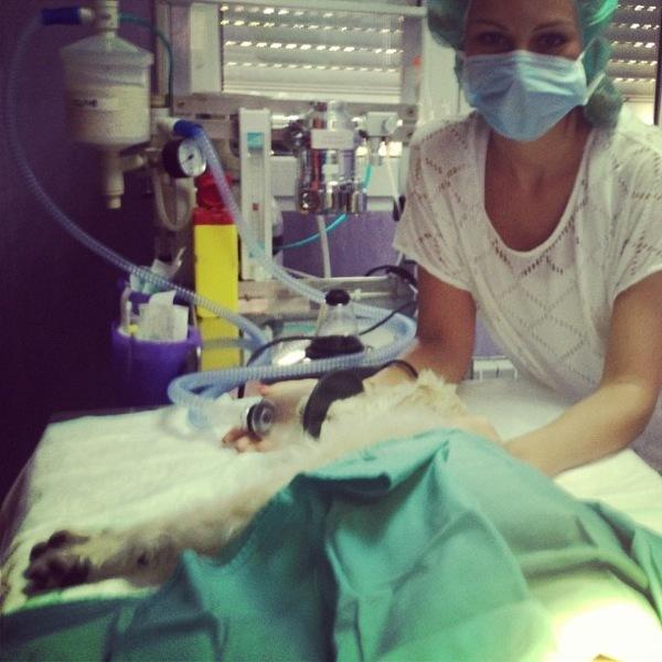 adivina veterinaria
