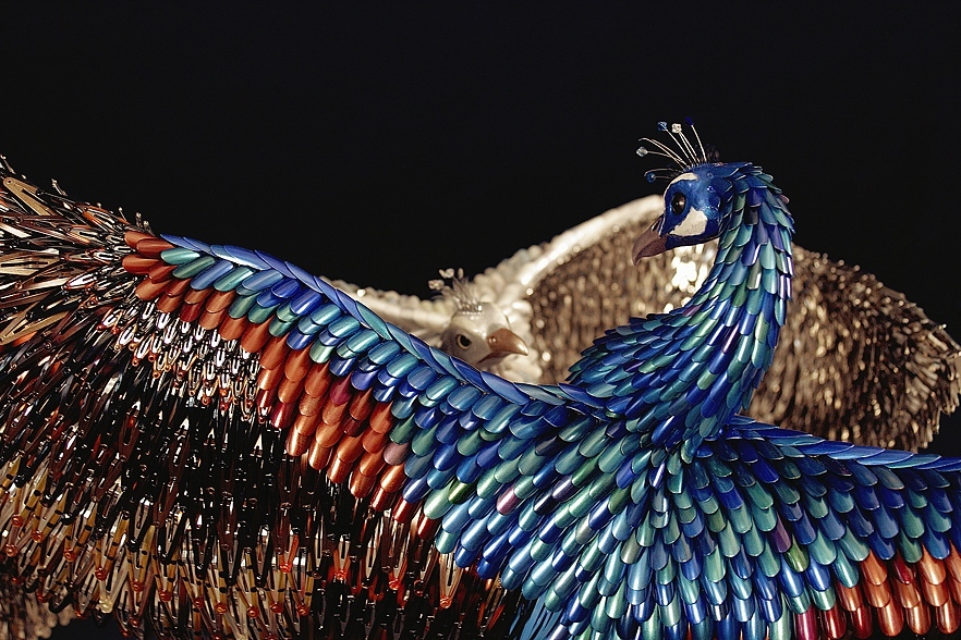 Foto de Peacocks de Laurel Roth (5/9)