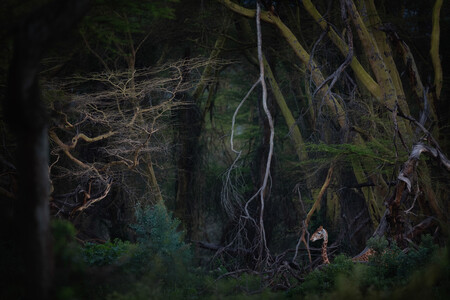 La fotografía de una jirafa en lo que parece un parque jurásico gana el premio Nature Photographer of the Year 2020