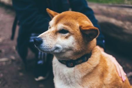 Las primeras 20 cosas que agradecerle a tu perro