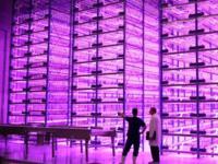 Plantas a la carta, otra ventaja del uso de iluminación LED en los invernaderos del futuro