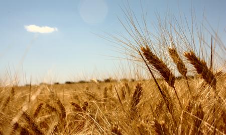 Estudio sobre los cambios necesarios para conseguir la alimentación sostenible