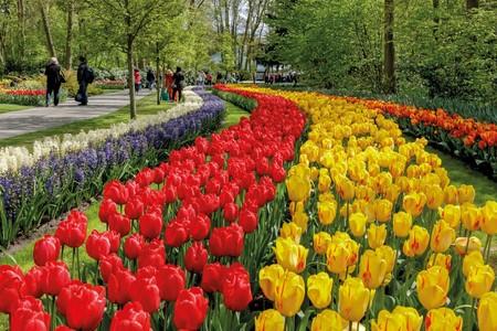 Keukenhof, el jardín de flores más grande (y bonito) del mundo