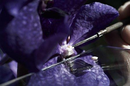 Orquidea laboratorio