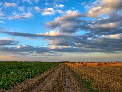 ¿Cómo se sabe si un suelo es propicio para la agricultura?