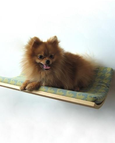 cama pared perro