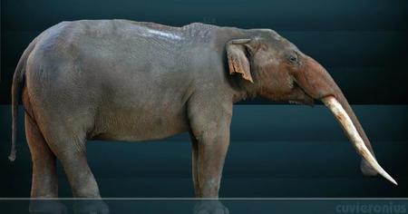 El aguacate. Un delicioso y sorpredente fósil viviente