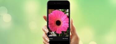 9 aplicaciones para identificar plantas con tu móvil