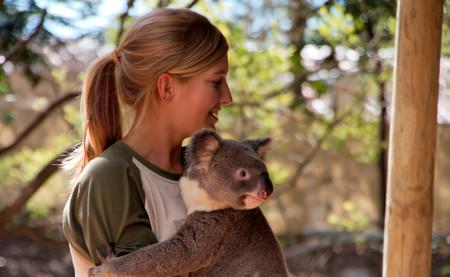 Animal Koala