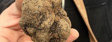 Así se caza la trufa negra, uno de los alimentos más caros del mundo
