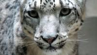 Se filtran más características de Snow Leopard