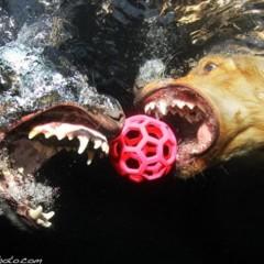 Foto 1 de 7 de la galería sorprendentes-fotografias-caninas-bajo-el-agua en Xataka Foto