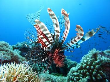 Las once inmersiones más alucinantes del mundo