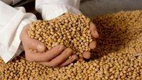 Las legumbres en la alimentación infantil: la soja