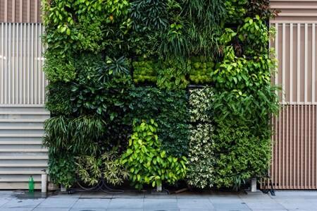 Los jardines verticales están de moda. Y tú puedes tener uno en casa, en la terraza, o en el interior
