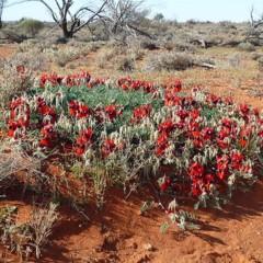 Foto 4 de 22 de la galería colores-del-gran-desierto-de-victoria en Xataka Ciencia