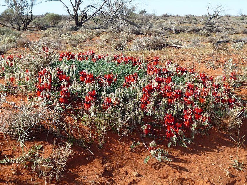 Colores del Gran Desierto de Victoria