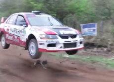 Hay perros con mucha suerte, como por ejemplo Pupi en el Rally de Codasur (vídeo)