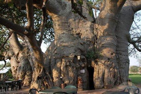 the-baobab-bar-musina.jpg