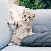 Un desarrollador de Alexa quiere que entiendas a tu gato: la app MeowTalk te interpreta los maullidos de tu mascota