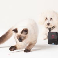 Petcube, espía y juega con tu mascota de forma remota