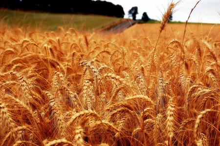 El cambio climático y el precio del pan conectados por una sola cosa: la voracidad de los insectos