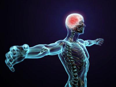 ¿Sabes que una red tridimensional recubre todo tu cuerpo? Así funciona la fascia