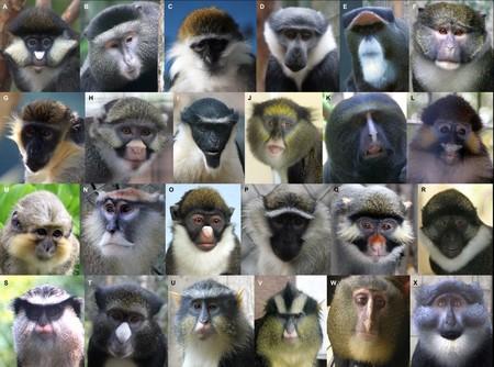 Una app de reconocimiento facial quiere ayudar a encontrar primates en extinción