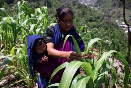 Conoce el sistema de milpa dirigido por mujeres que salvaguarda el maíz orgánico de Chiapas