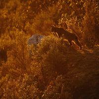 Montphoto 2020, la 24ª edición del clásico festival de fotografía de naturaleza, se celebrará íntegramente online