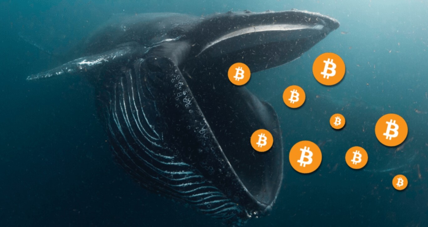 whales of bitcoin