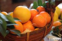 Los cítricos, color, olor y sabor. Homenaje a la tierra de Sorolla en el Gastrofestival