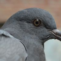 Dar de comer a las palomas: malos para ellas, malo para todos