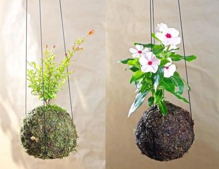A tu bola kokedamas, plantas sin maceta para personas que van a su aire