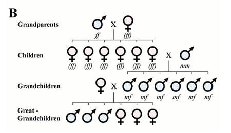 genes-padres